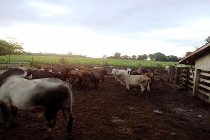 Preço do leite volta a decepcionar produtores no interior; custos de produção sobem