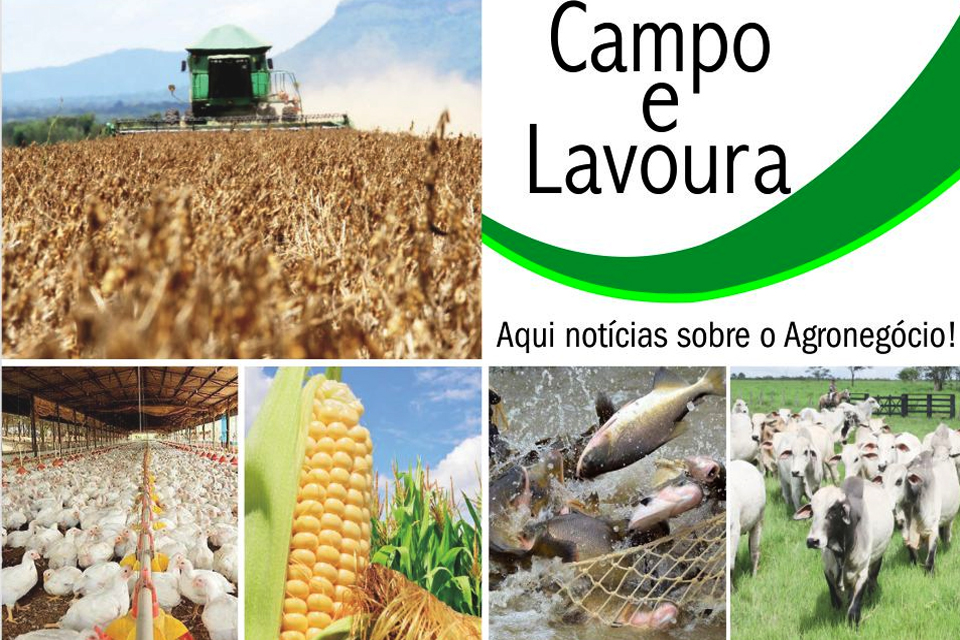"""Regulação fundiária em Rondônia; Inaugura em agosto """"Susten-nutri Ração Animal""""; Milho de Rondônia em alta"""
