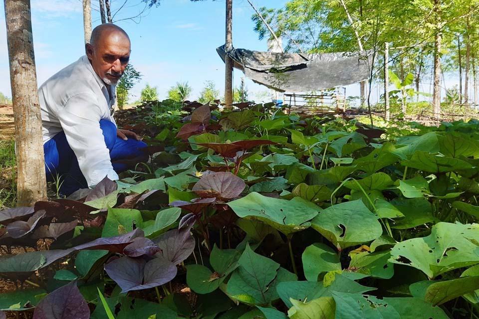SAF é alternativa ao agricultor na diversificação produtiva; modelo poderá ser conhecido na Rondônia Rural Show Internacional