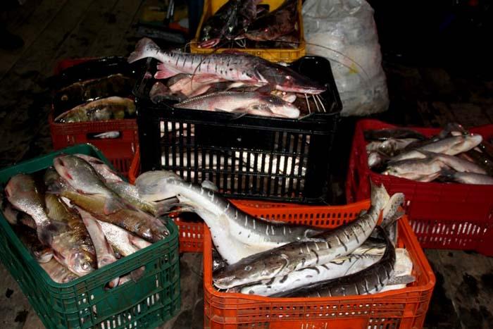Em quatro meses, fiscalização ambiental apreendeu mais de uma tonelada de peixes e doou a entidades assistenciais