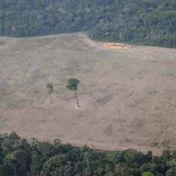 """Deu na ISTOÉ: """"A política destrutiva de Bolsonaro em Rondônia""""; estado teria perdido área equivalente ao RJ"""